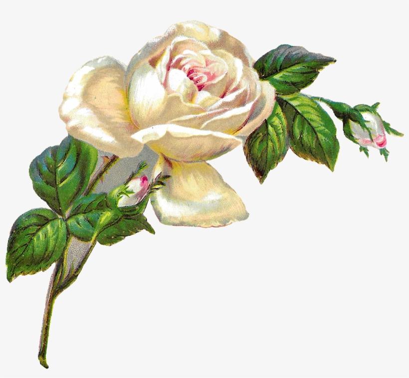 White Rose Shabby Chic Flower Image Clip Art Banner ...
