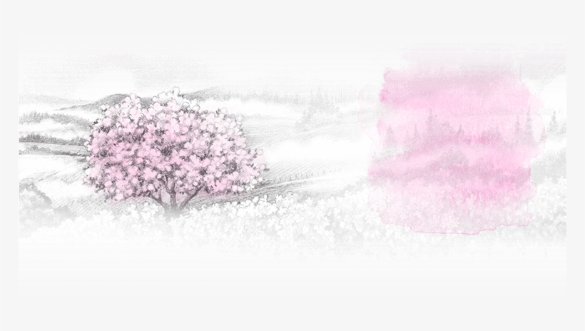 And So It Is With Smoke Tree Wines - Cherry Blossom, transparent png #9752729