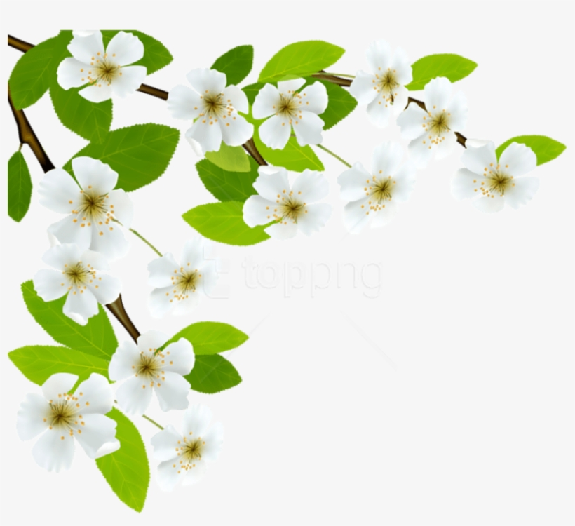 Free Png Download White Spring Branch Png Images Background - Spring Leaves Transparent, transparent png #9774826