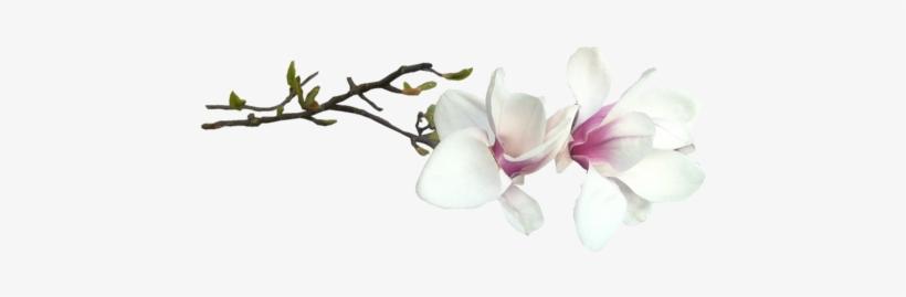 Fleur Magnolia Magnolia Wall Tapestry Small 51 X 60 Free