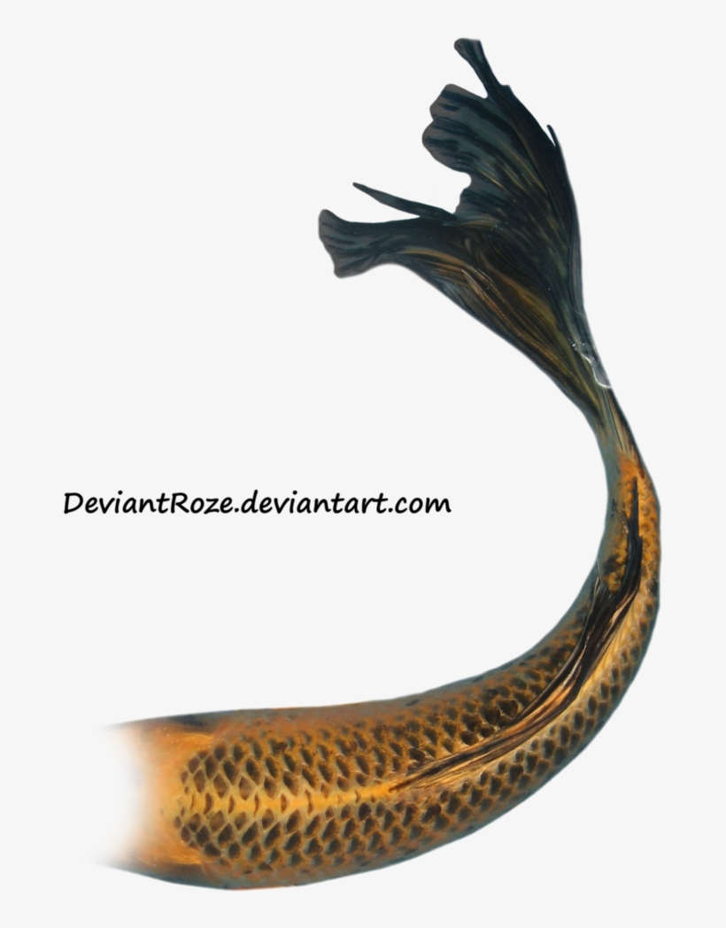 Mermaid Tail 08 By ~deviantroze On Deviantart - Mermaid Tails White Background, transparent png #995142
