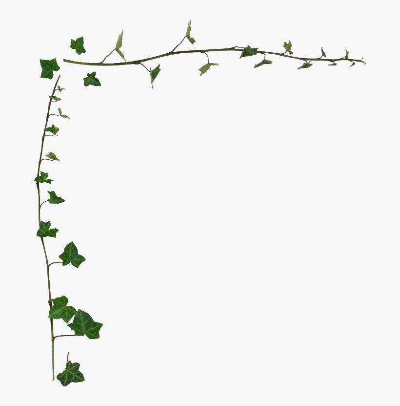 Ivy Clipart Transparent - Transparent Vine Border Png, transparent png #995820