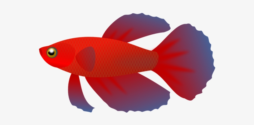 Picture Free Betta Transparent Pencil And In Color - Betta Fish Vector Png, transparent png #995996