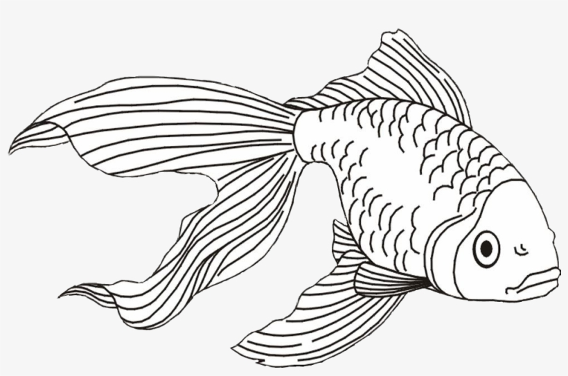 Goldfish Clipart Beta Fish - Fish And Shark Coloring Pages, transparent png #996084