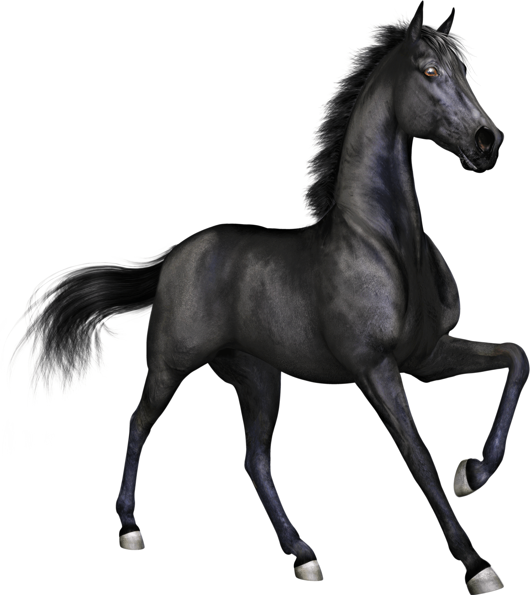 Download Horse Images Png Black Horse Png Png Image With No Background Pngkey Com