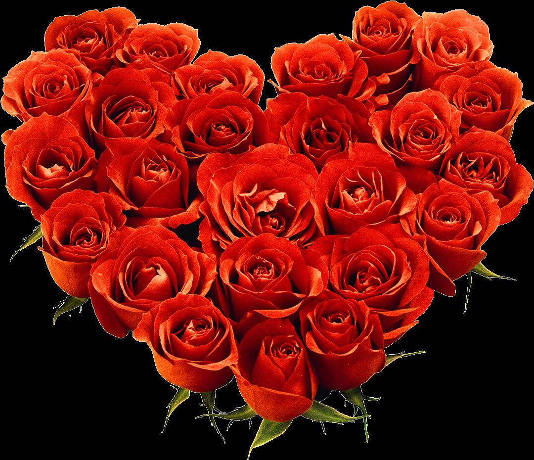 Спасибо розы картинка