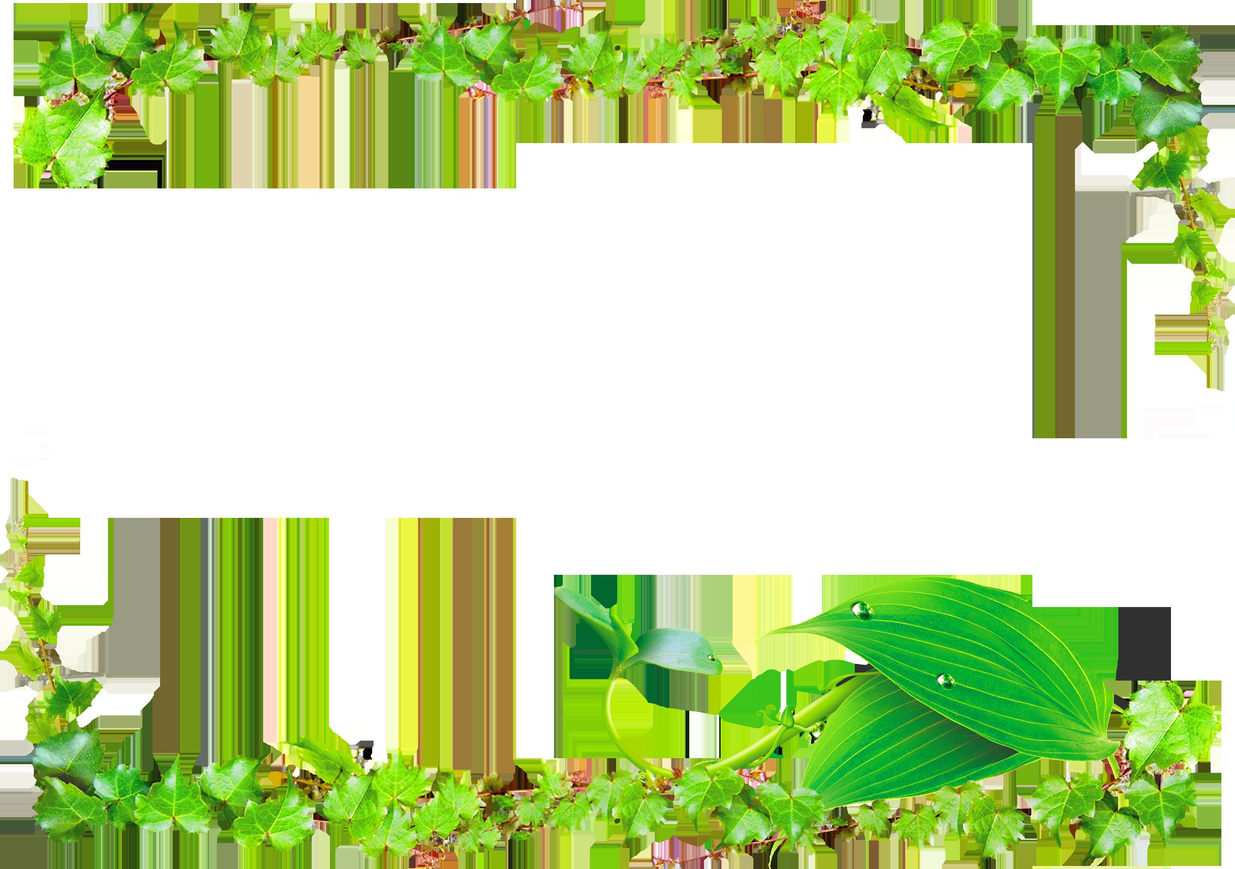 Green Vines Png - Transparent Background Vine Border Png (2450x1725), Png Download
