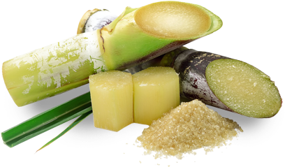 About Sugar Cane, Where You'll Learn About Its History, - Use Of Gibberellic Acid In Brewing (450x348), Png Download