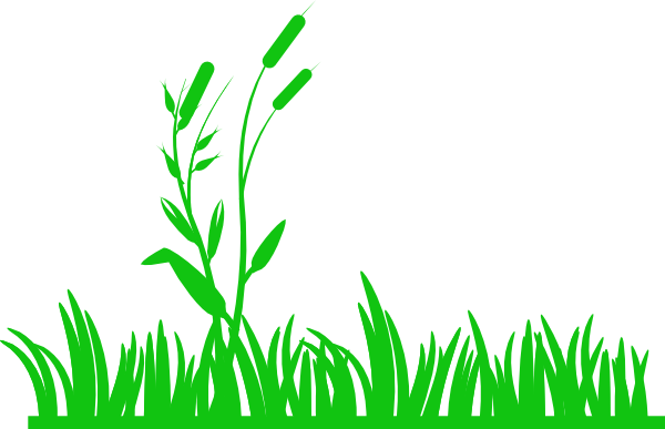 Download Png Transparent Library Green With Reeds Clip Art At Meadow Clip Art Png Image With No Background Pngkey Com