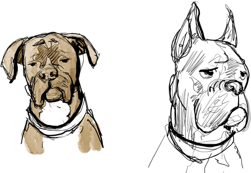 Download Abandon Bonus Page Draw A Boxer Dog Face Png Image With
