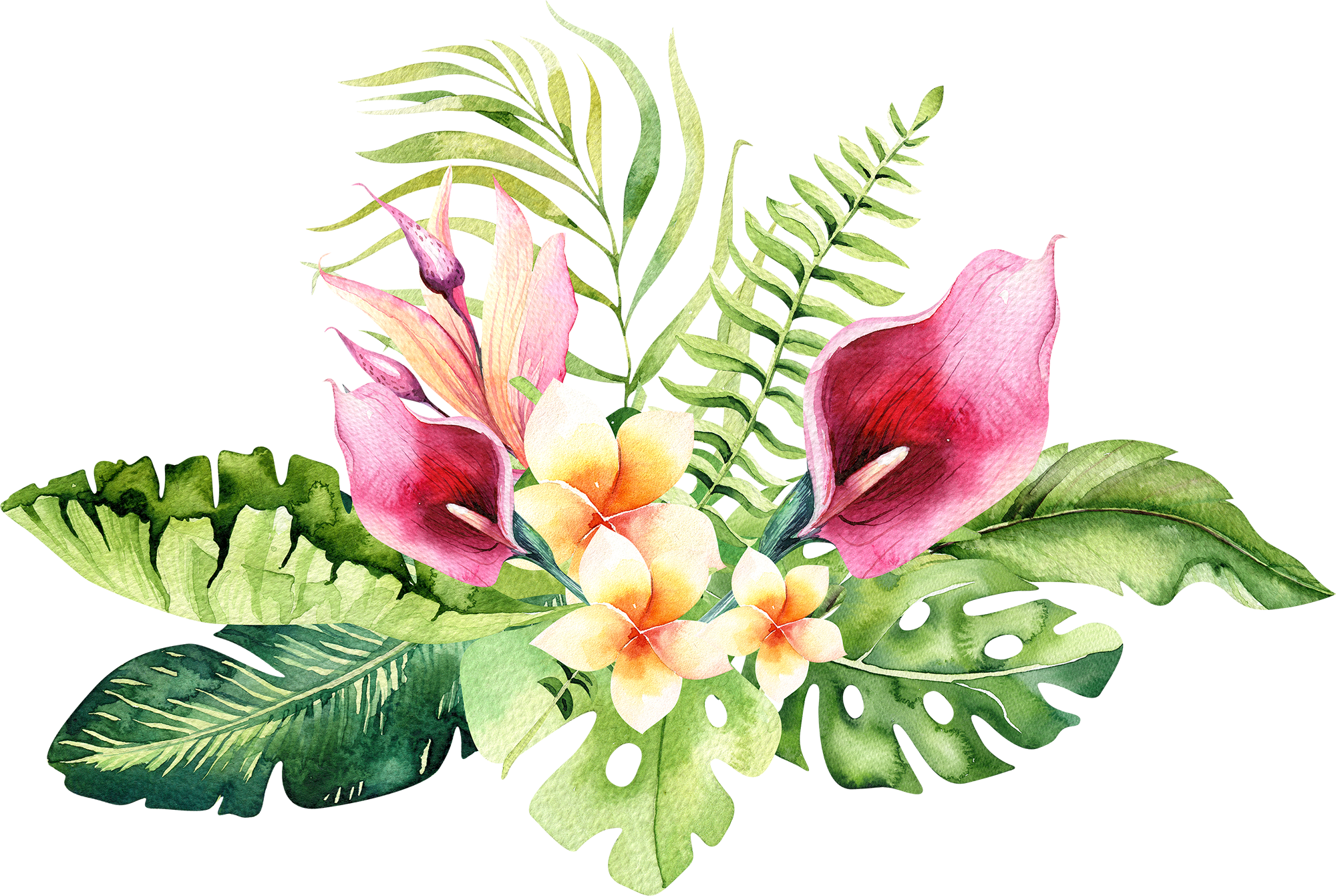 Download 4 - Hand Drawn Watercolor Tropical Flower PNG ...