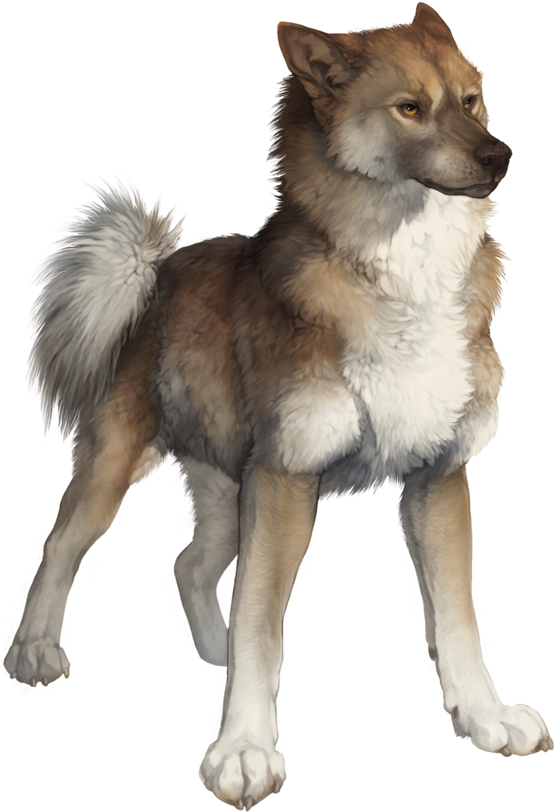 Download Wolf Drawings Art Drawings Animal Sketches Art Sketches Wolf Png Image With No Background Pngkey Com