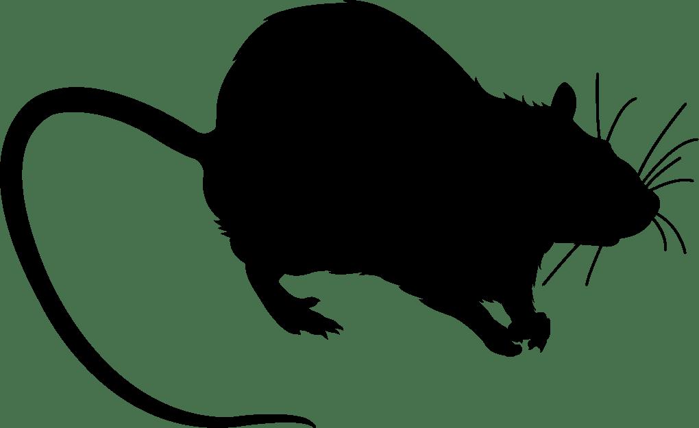 Мышь черная картинка