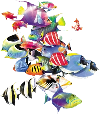 Download Oa 32 School Of Fishes Png Png Image With No Background Pngkey Com