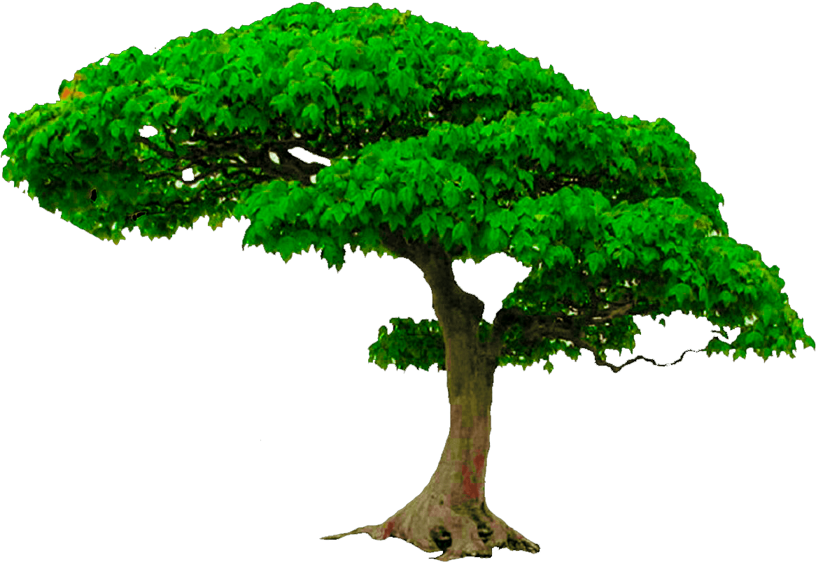 Download All New Tree Png Zip File, Photoshop Editing Png, Picsart
