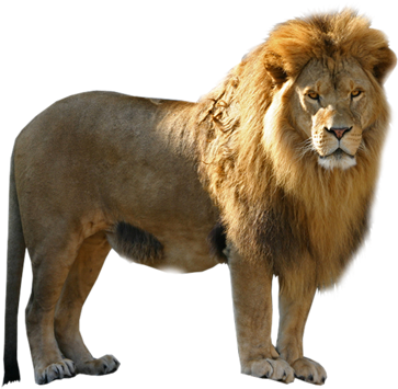 Download Lion Png Free Download - Pmln Lion Png PNG Image