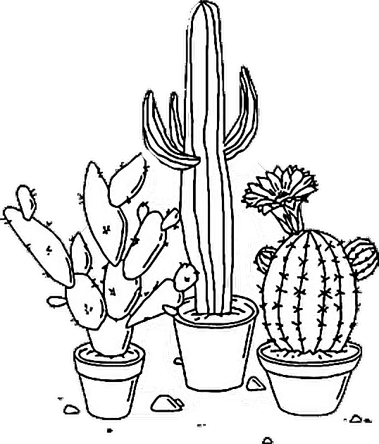 Download Sticker Tumblr Aesthetic Png Cactus Plant