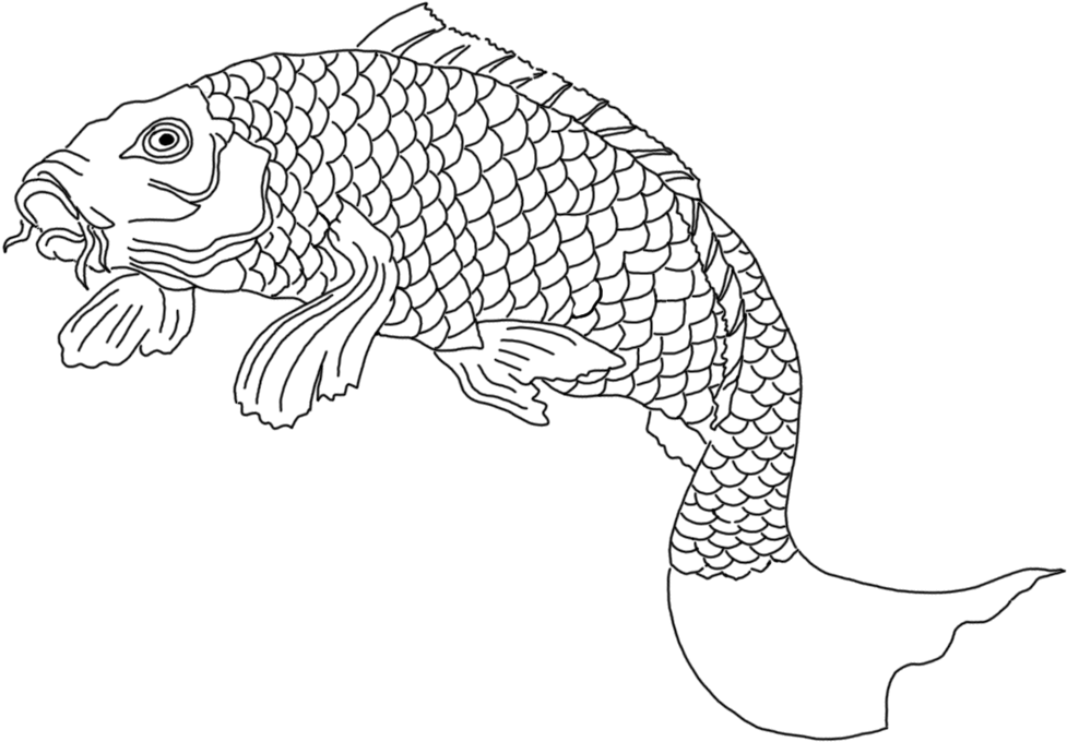 Download Koi Fish Sketch Black White Drawing Png Image With No Background Pngkey Com