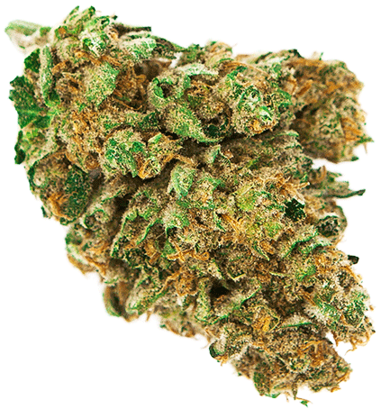 Download Weed Nugget Png Marijuana Bud Png Png Image With No Background Pngkey Com