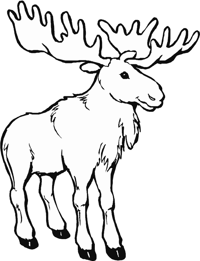 Download Png Library Animals Printable Coloring Pages Page Moose Coloring Pages Png Image With No Background Pngkey Com