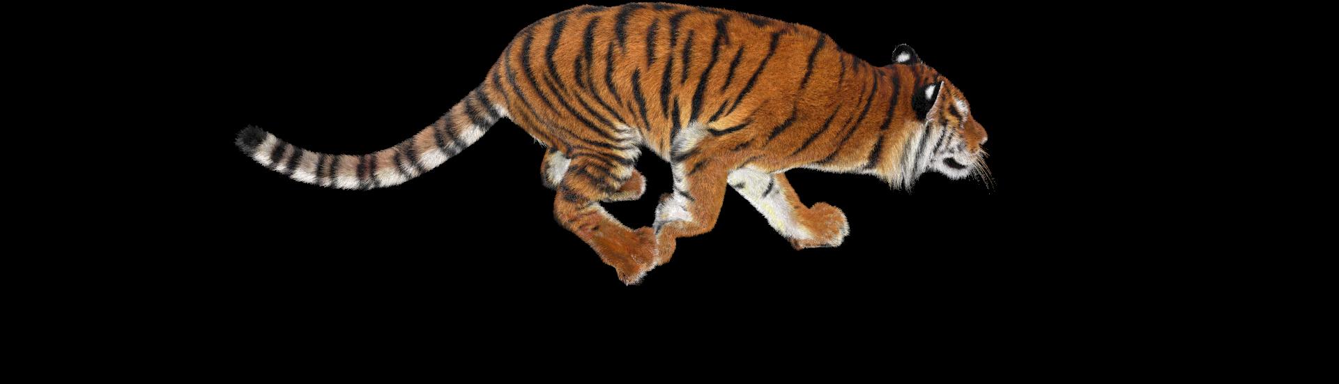 логово тигров фон композиция барной
