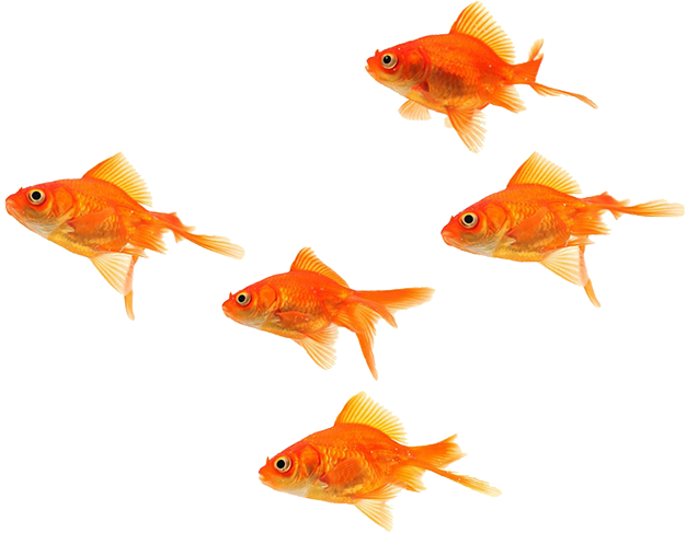 Download Fish School Png Clip Art Free Stock Sea Png Image With No Background Pngkey Com
