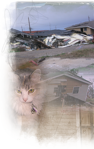 Cats Who Survived Katrina Live In The Streets, On Their - Domestic Short-haired Cat (378x600), Png Download