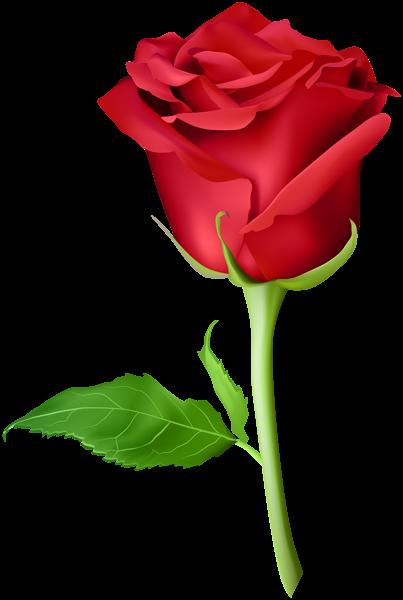 Pin By Anahita Daklani On Roses In 2018 - Orange Rose Flower Png (403x600), Png Download