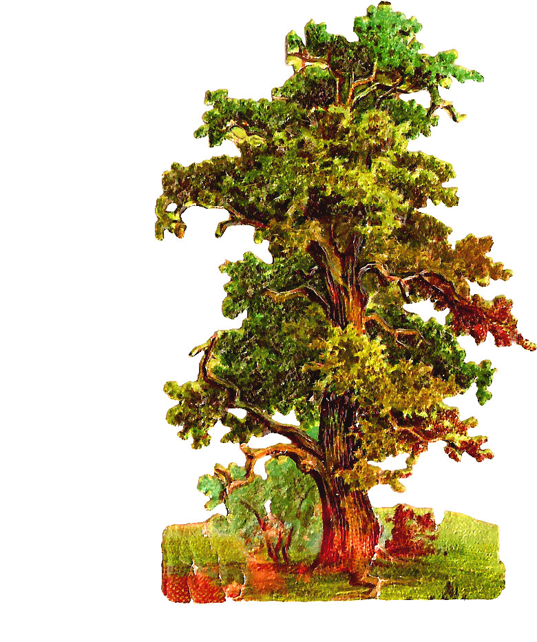 Download Oak Tree Clipart Vintage Oak Tree Png Png Image With No