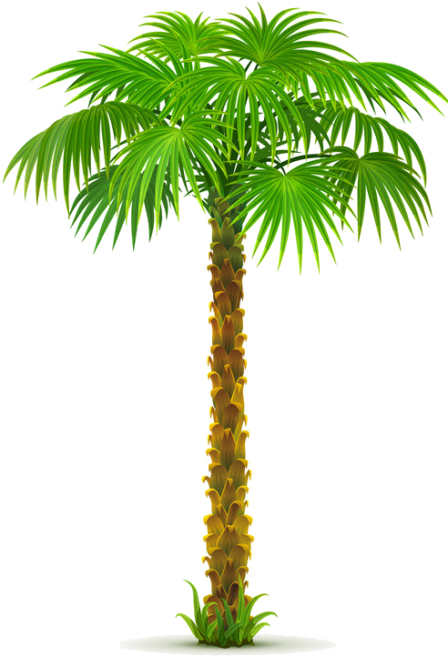 8963e73a Palm Tree Png, Paper Palm Tree, - Date Tree Clip Art Png (516x778), Png Download