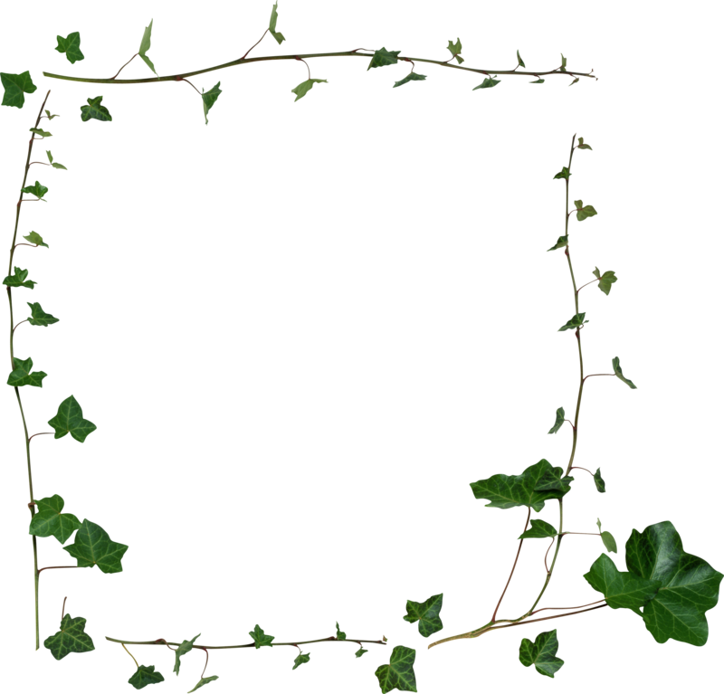 Publicat De Eu Ciresica La - Transparent Vine Border Png (800x767), Png Download