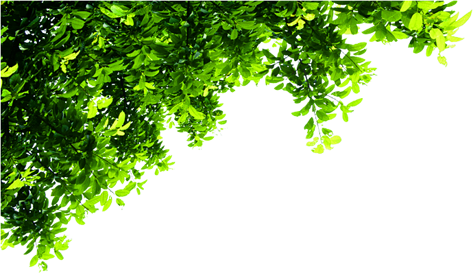 Download Top Tree Transparent - Corner Tree Png PNG Image with No