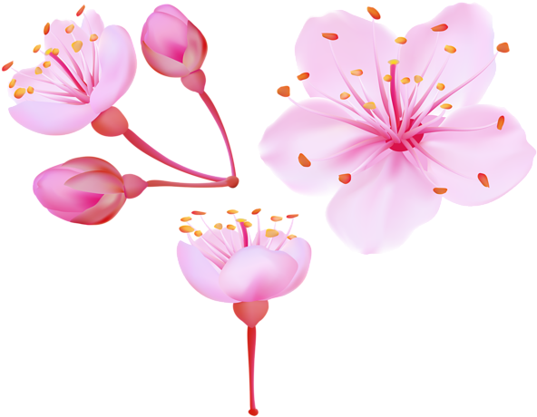 Spring Cherry Blossoms Png Clip Art Image - Cherry Blossoms Clip Art (600x466), Png Download