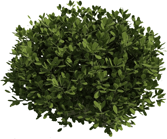 Bushes And Branches - Tree Cut Out Top View (563x486), Png Download