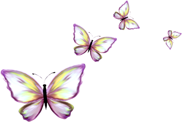 Download Papillon Clipart Border Butterfly Png Image With No Background Pngkey Com