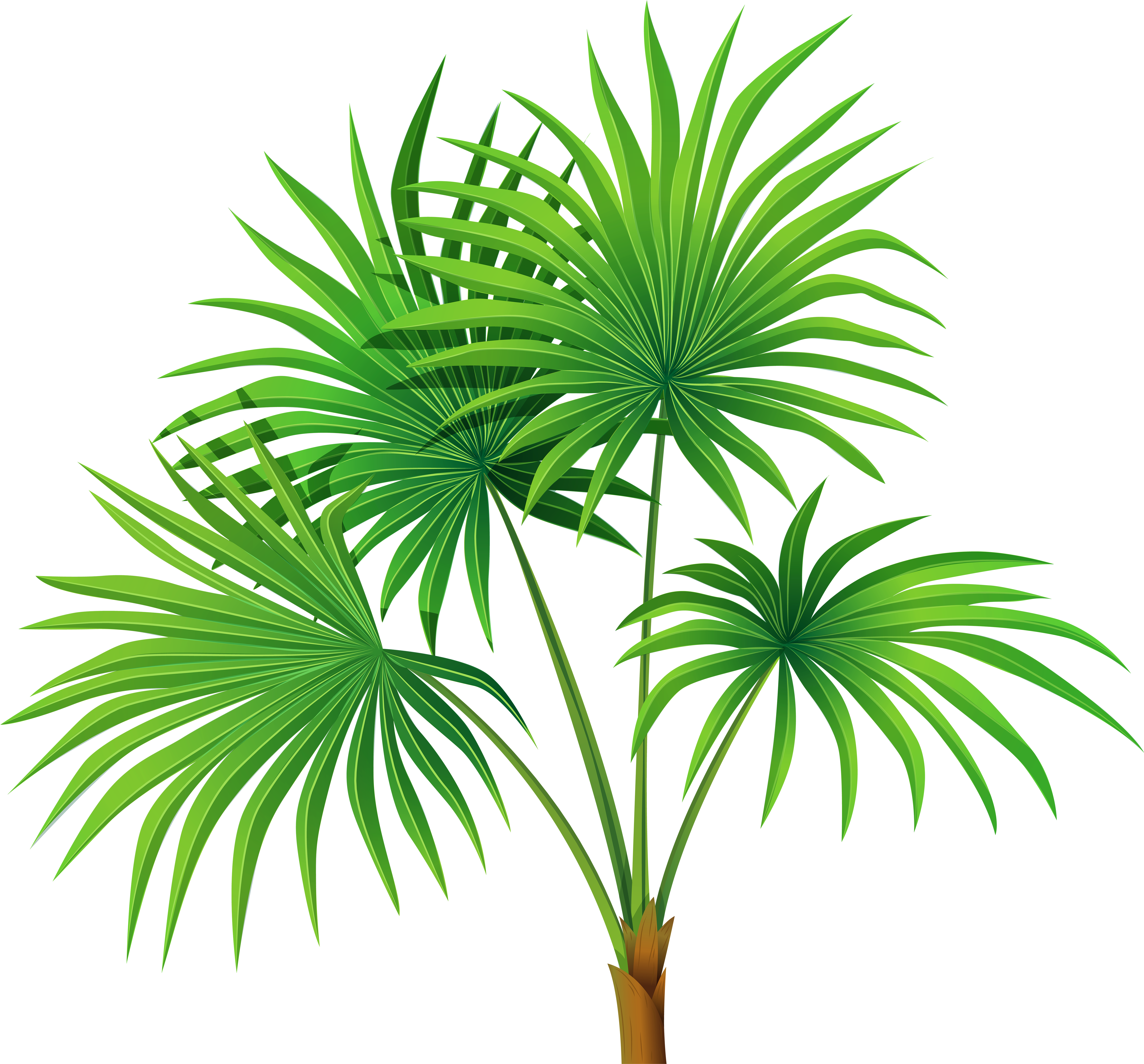 Palm Tree Leaves Clipart (6000x5580), Png Download