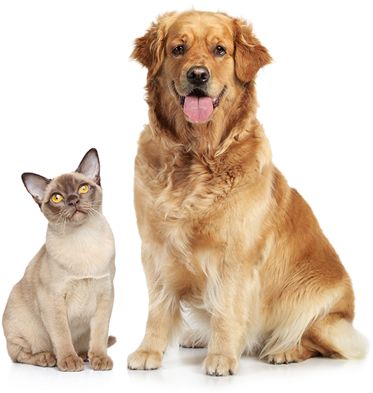 Download So They Can See A Better Life - Cat And Dog Png PNG Image with No  Background - PNGkey.com