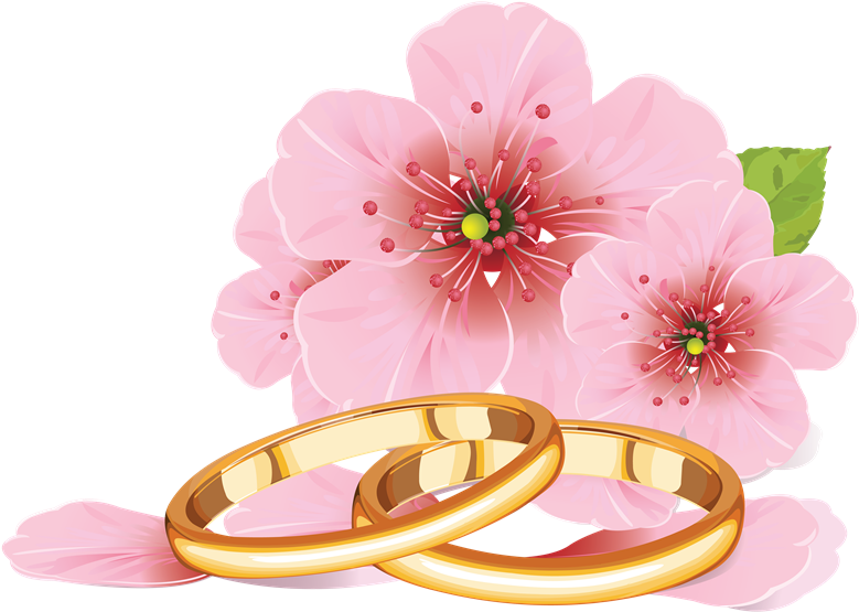 Palomas Con Anillos De Boda Png - Cherry Blossom Flower Drawing (800x576), Png Download
