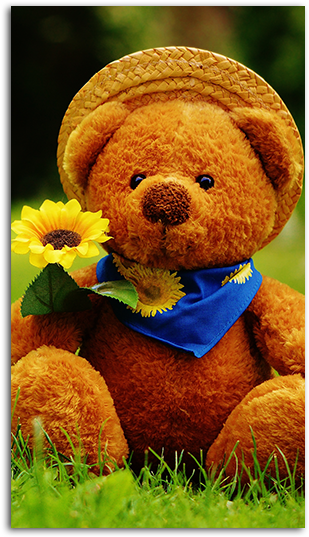 Download Teddy Bear Wallpaper Hd Day I Met You Png Image With No Background Pngkey Com