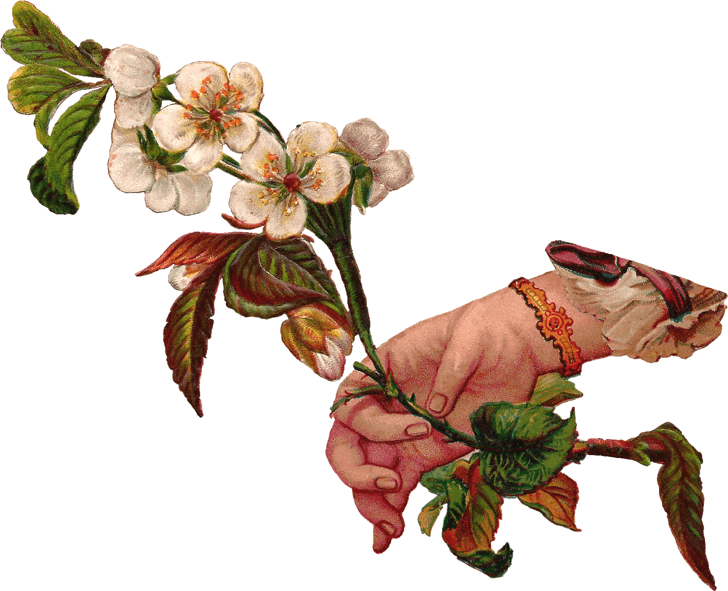 Download Hand Giving Flowers Vintage Plant Illustrations Transparent Png Image With No Background Pngkey Com