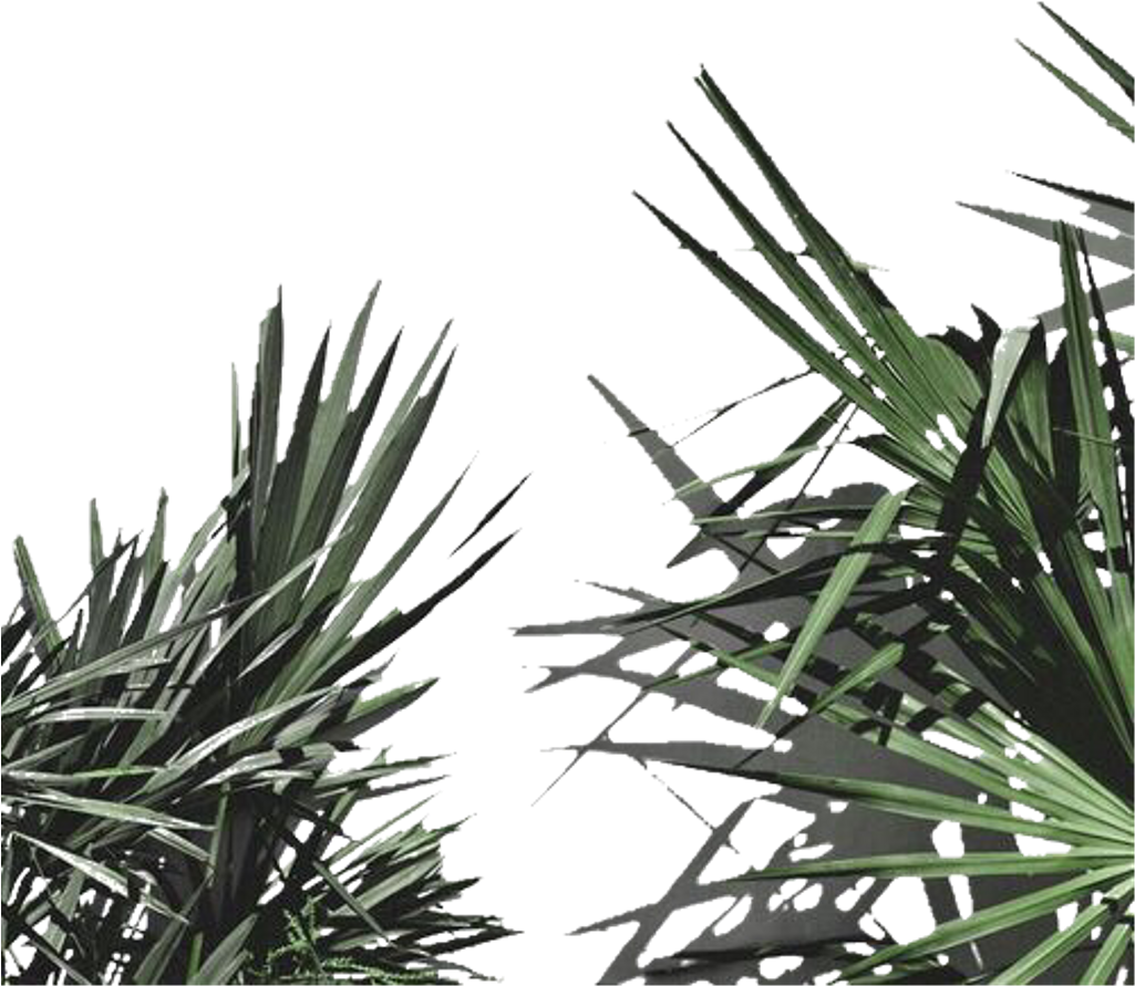 Download Aesthetic Plant Leaves Png Freetoedit Plant Aesthetic White Png Image With No Background Pngkey Com
