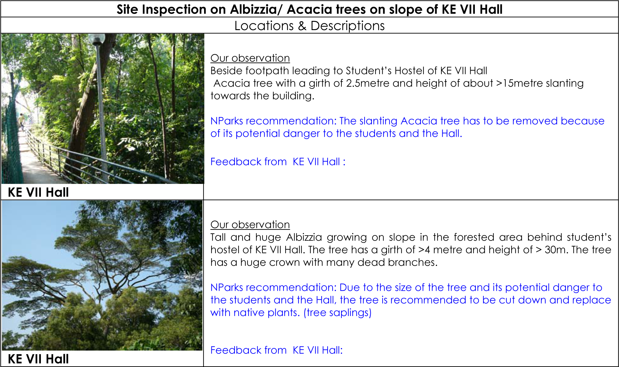 Albizzia Tree Acacia Tree At Ke Vii Hall - Acasia Tree Botanical Name (2034x1216), Png Download