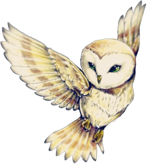 Download Cute Owl Flying Owls Owlart Cute Edits Editing Editor Owl Tattoo Drawings Png Image With No Background Pngkey Com