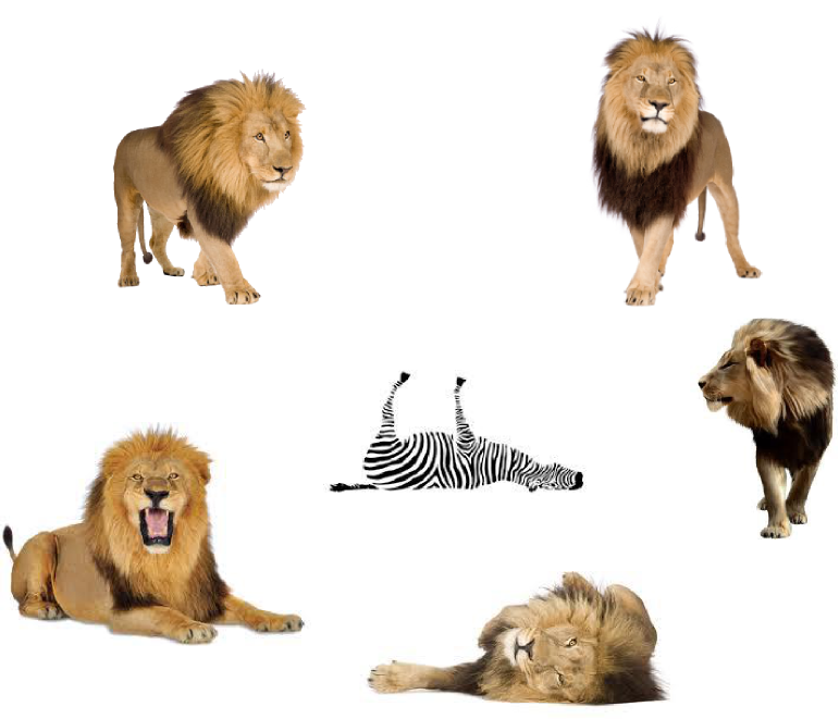 Lions And A Dead Zebra - Kids' Guide To Bible Animals (771x661), Png Download