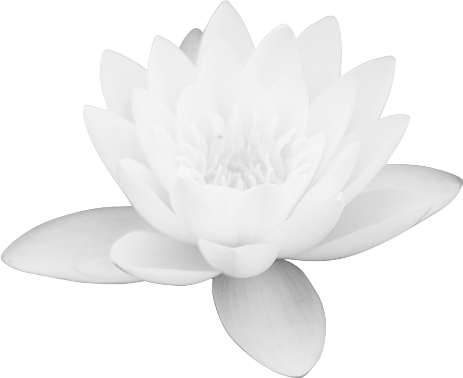 Download Lotus Flower Png Images Free Download Png Library White
