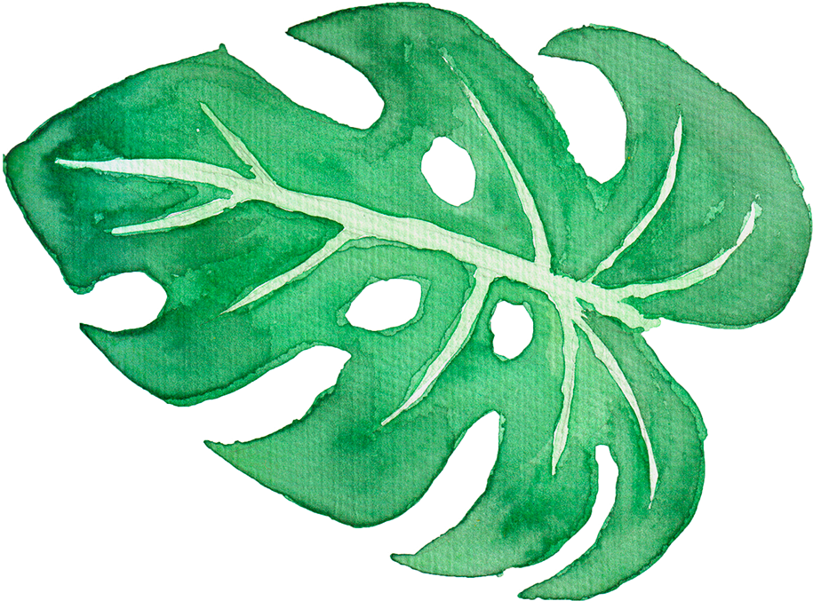 Download Tropical Leaves On Behance Graphic Library Watercolor Tropical Leaves Png Png Image With No Background Pngkey Com Download nature free stock photo tropical leaves free background. download tropical leaves on behance