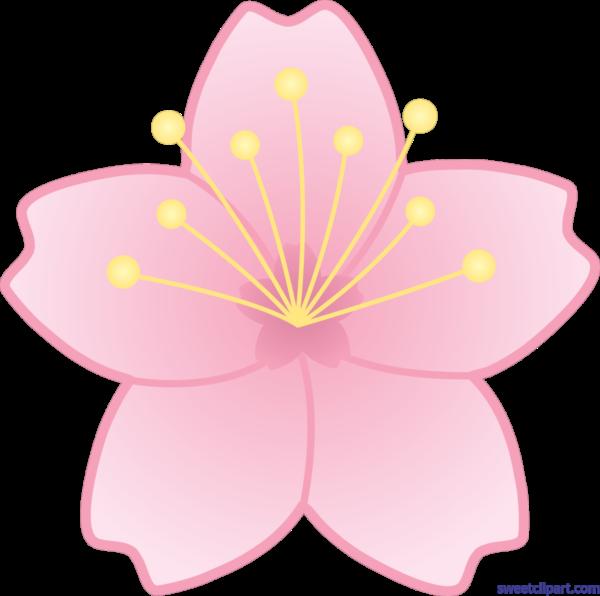 Blossom Clipart Sakura Flower - Cherry Blossom Flower Clipart (550x547), Png Download