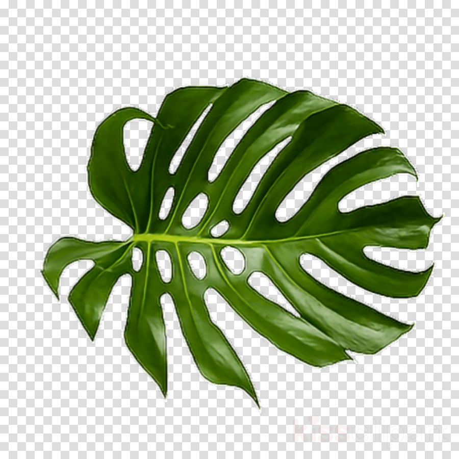 Tropical Leaf Png Clipart Palm Trees Leaf Clip Art - Tropical Palm Leaf Png (900x900), Png Download