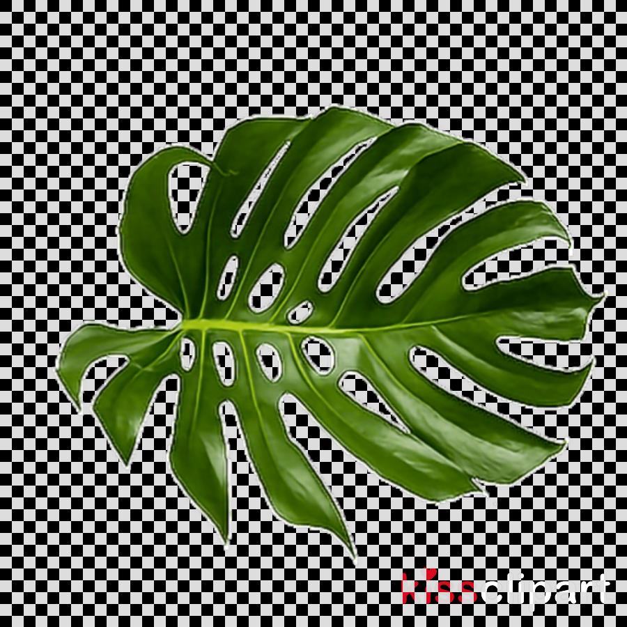 Tropical Leaf Png Clipart Palm Trees Leaf Clip Art ...