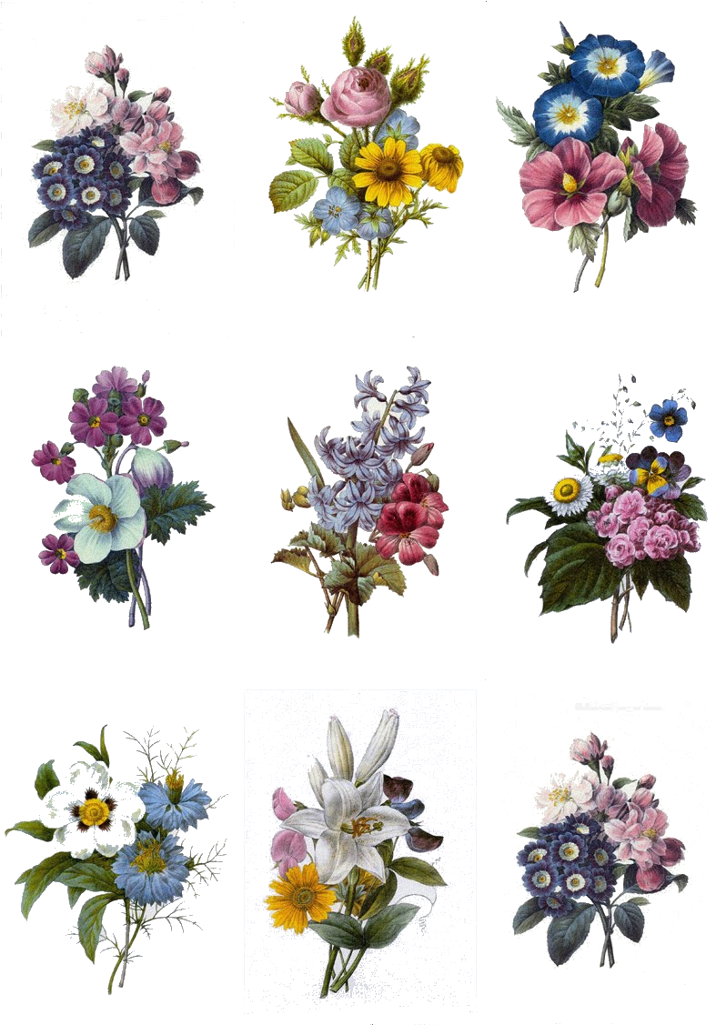 Carnation Tattoo, Flower Bouquet Tattoo, Gladiolus - Colorful Flowers Tattoo Designs (808x1142), Png Download